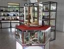 Hổ mang bạch tạng dài 2 mét, giá 200 triệu đồng hiếm nhất Việt Nam
