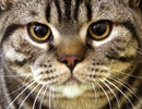 Mèo hoang giết hại hàng triệu động vật bò sát