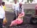 Phẫn nộ cảnh con trai dùng mẹ già làm lá chắn trước máy cày