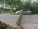 Giông lốc cuốn bay mái nhà, quật ngã loạt cây xanh khủng trên phố Sài Gòn