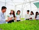 """Sức hút và cơ hội việc làm của các ngành """"Nông - Lâm - Ngư nghiệp"""" tại miền Trung, Tây Nguyên và cả nước"""