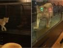 Clip sư tử bị nhốt trong lồng kính mua vui cho khách gây tranh cãi