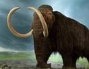Các công nhân làm đường phát hiện xương cốt voi ma mút lông xoăn