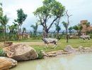 Có gì ở trong River Safari đầu tiên và duy nhất tại Việt Nam?