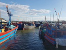 Quảng Nam: Thiếu lao động đi biển, tàu tiền tỷ nằm bờ phơi nắng