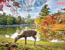 Những địa điểm ngắm mùa thu đẹp nhất tại Hàn Quốc, Nhật Bản