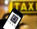 """Truy thu 53,3 tỷ đồng thuế của Uber: Cục thuế TPHCM lúng túng, xin lãnh đạo """"cứu viện"""""""