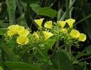 Thử nghiệm diệt thực vật ngoại lai tại VQG Phong Nha - Kẻ Bàng