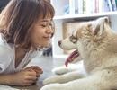 Các nhà khoa học giải mã phản ứng của cún cưng với cảm xúc của chủ