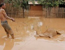 """Người Lào sau sự cố vỡ đập: """"Không ai cảnh báo chúng tôi"""""""