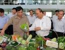 Thủ tướng: Xoài Sơn La đâu kém xoài Nhật, hoa quả Việt ngon thua gì Thái Lan!