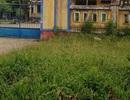 Vụ cô giáo bị xâm hại: Tạo điều kiện cho cô giáo chuyển trường học
