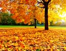 Tháng 8 chớm Thu - ta có hẹn với châu Âu mùa lá rụng