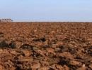 Nga mời chào Trung Quốc thuê đất nông nghiệp