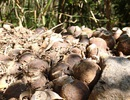 Phát hiện 97 quả đạn trong sân trụ sở tỉnh uỷ Quảng Ngãi