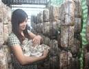 """Người phụ nữ """"chân đất"""" kiếm hơn nửa tỷ đồng mỗi năm nhờ trồng nấm"""