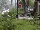 Hà Nội: Cây dại mọc như ở bãi hoang giữa phố Giảng Võ