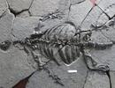 Rùa hóa thạch cổ đại không có vỏ giúp tìm hiểu quá trình tiến hóa của rùa