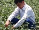 Không làm thầy giáo, về quê trồng cây dại kiếm tiền tỷ mỗi năm