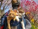 Hành trình xuyên đất Nhật Bản của đôi bạn mèo đáng yêu
