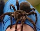 Nhân viên bảo tàng ăn cắp côn trùng hiếm trị giá 930 triệu đồng đem bán