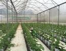 An Giang: Phát triển nông nghiệp công nghệ cao… thuận lợi và thách thức