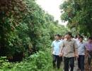 """Bộ trưởng Nông nghiệp: """"Hưng Yên phải chuẩn bị mọi kịch bản để tiêu thụ nhãn"""""""