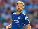 Chelsea đứng trước nguy cơ mất Fabregas với giá… 0 đồng