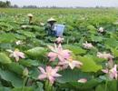 Trải nghiệm mùa nước nổi ở đồng bằng sông Cửu Long