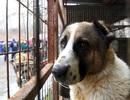 Hạ viện Mỹ thông qua dự luật cấm ăn thịt chó mèo