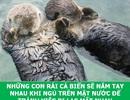 """Những sự thật """"tan chảy"""" khiến bạn thêm yêu các loài sinh vật này!"""