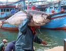 Đánh bắt cá bất hợp pháp có thể bị phạt tới 2 tỷ đồng