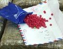 Ma túy tổng hợp đang giết người như thế nào?