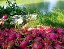 Nông sản Việt xuất ngoại: Tiểu ngạch áp đảo chính ngạch