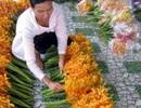 Cô gái 8X bỏ công nhân về trồng lan, bán 1,7 triệu đồng cành/năm