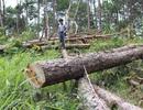 Bắt giam 5 đối tượng tấn công nhân viên bảo vệ rừng, cướp tài sản