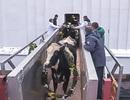 Đàn bò sữa đầu tiên nhập khẩu từ Mỹ của Tập đoàn TH cập cảng tại Nga