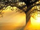 Đột phá giảm cân mới: Ánh nắng mặt trời chính là giải pháp