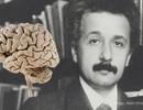 Khám phá chuyến phiêu lưu kỳ thú của bộ não vĩ đại nhất thế giới