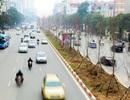 Chuyên gia nói gì về việc Hà Nội trồng cây phong lá đỏ trên đường phố?