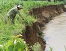 Đắk Nông: Gia cố bờ sông sạt lở cuốn trôi nhà cửa vườn tược của dân!