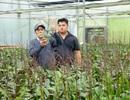 Đưa công nghệ vào sản xuất hoa Tết