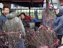 Chợ hoa Hà Nội đã có đào Nhật Tân bán sớm