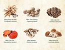 6 loài nấm y học dành cho người mắc ung thư