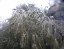 Sa Pa lạnh 1,9 độ C, đèo Ô Quý Hồ xuất hiện băng tuyết
