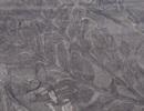 Các nhà khoa học phát hiện rừng hóa thạch 280 triệu năm tuổi ở Nam Cực