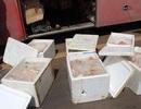 Chở gần 2,5 tạ thịt thối từ miền Bắc vào Tây Nguyên tiêu thụ