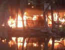 Cả trăm người lao vào dập tắt đám cháy ở khu câu cá giải trí