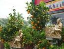Thị trường hoa, cây cảnh Tết: Đông người bán, thưa thớt người mua