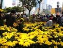 Đi chơi hội hoa xuân, đường hoa TPHCM, gửi xe ở đâu?